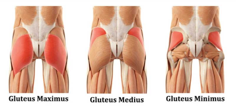 These three major muscles make up your butt