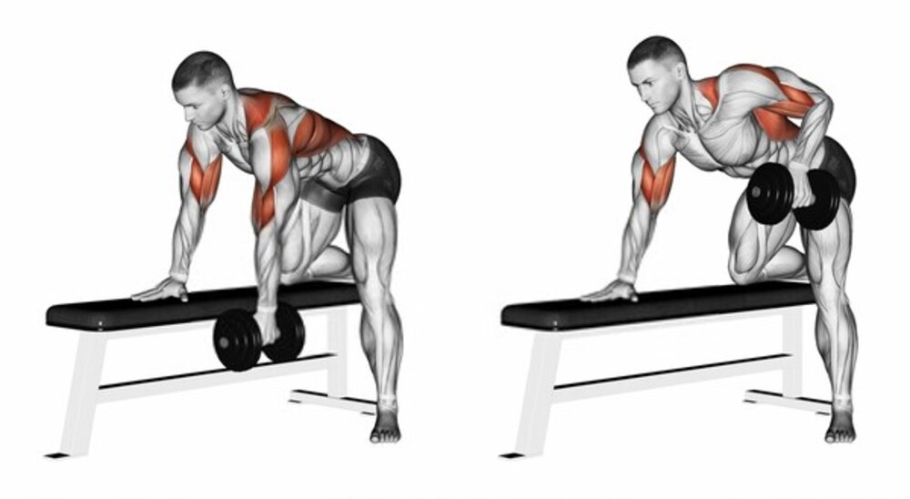 What is Rear Deltoid Row